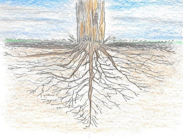ROOTED IN GOD'S LOVE.jpg